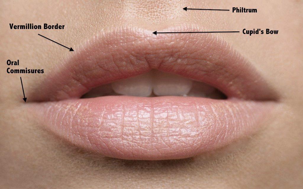 Lip Filler Regons